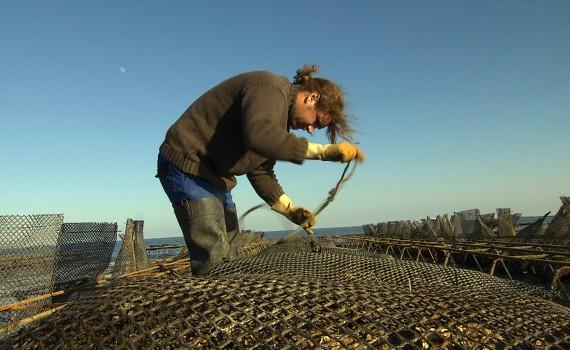 NaturNah: Der Austernfischer von Sylt