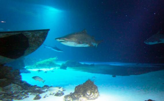 Wie geht das? Haie auf der Ostsee-Insel