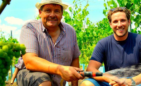 Weinanbau im hohen Norden